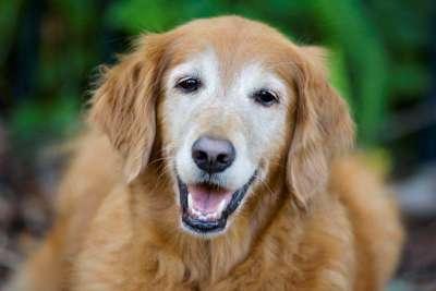 Bạn đã biết tuổi thọ của chó và cách tính đơn giản chưa?