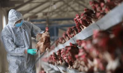 Dịch cúm H5N1 có lây từ người sang người không?