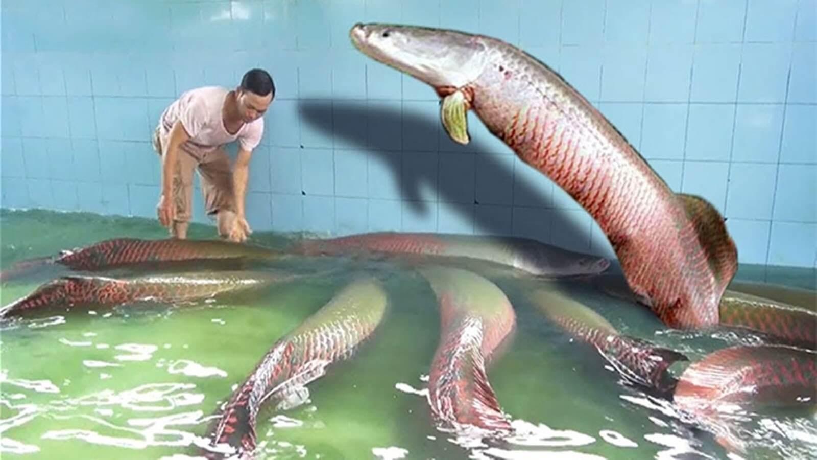 Cá hải tượng có ngoại hình gần giống với loài cá rồng
