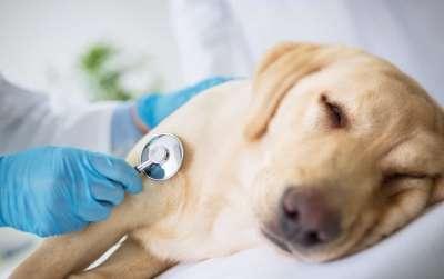 Chó bị đau bụng tiêu chảy phải làm sao? Lưu lại ngay những cách này