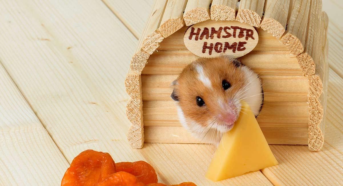 Phô mai được nhiều người biết đến là thức ăn ưa thích của chuột