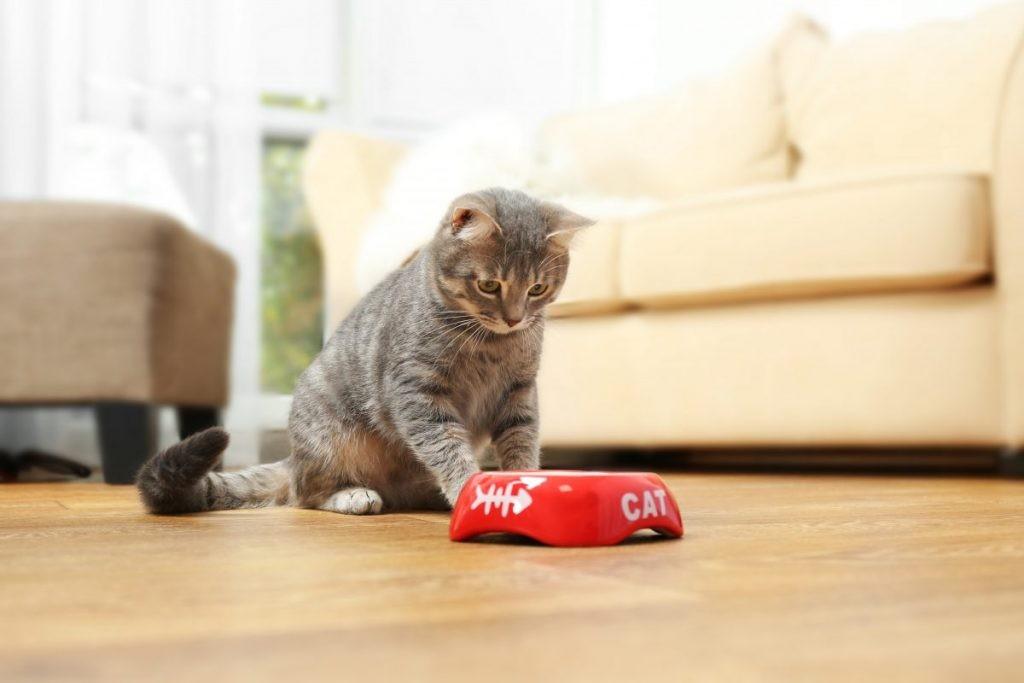 Cho mèo ăn trong bát có độ rộng đủ lớn, sâu