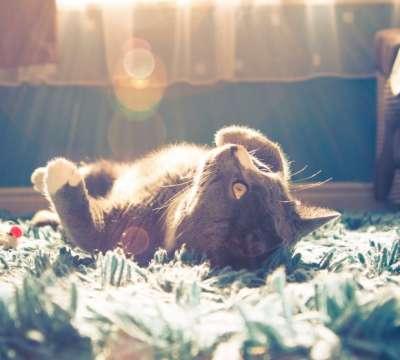 Khắc phục tình trạng mèo bỏ ăn theo chỉ dẫn của các chuyên gia thú y