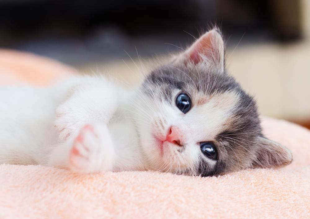 Mèo bỏ ăn do phải xa chủ một thời gian