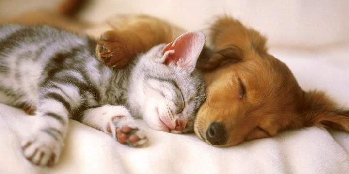 Mua thêm thú cưng về làm bạn với mèo