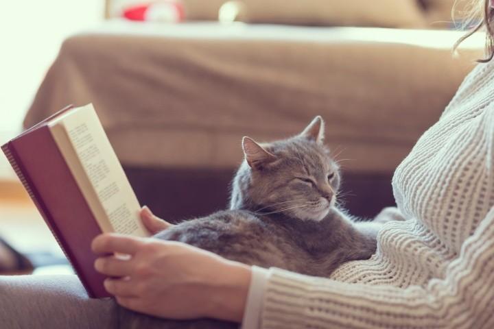 Dành thời gian để chơi với mèo nhiều hơn