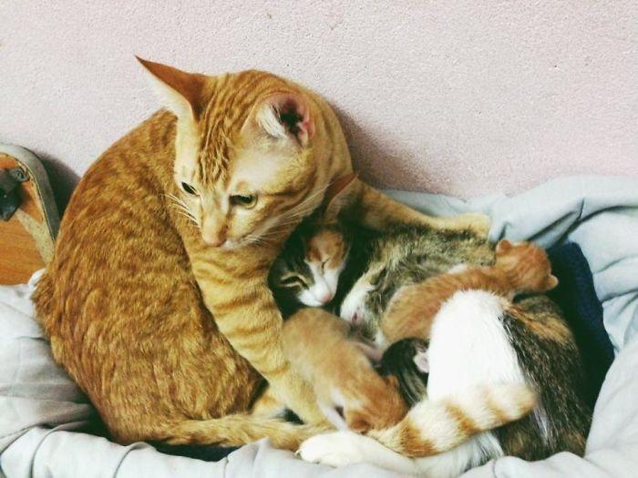 Tỉ lệ mèo tam thể đực đươc sinh ra là 1/3000