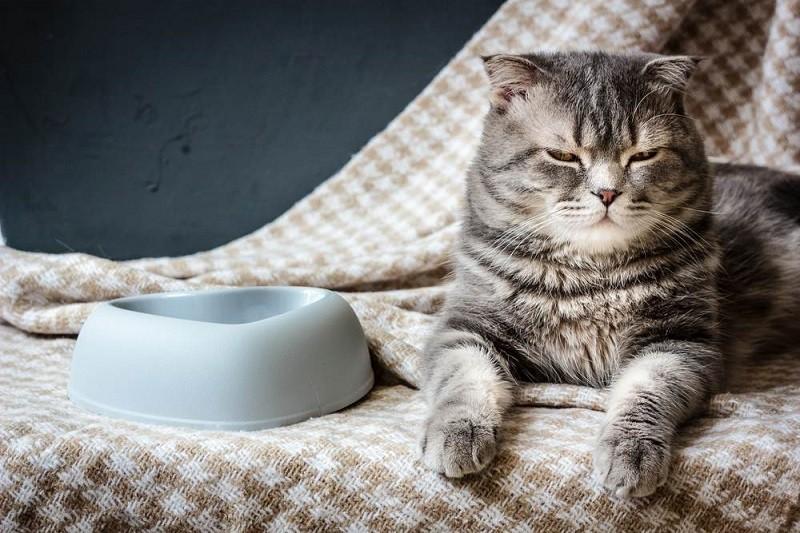 Có nên triệt sản mèo cái không?