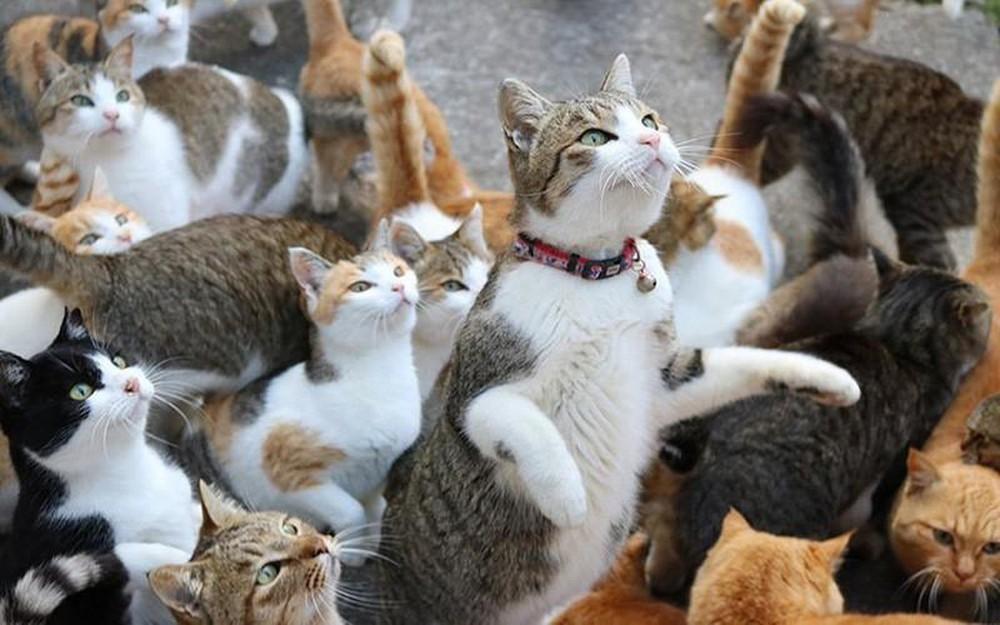 Triệt sản mèo cái giúp kiểm soát số lượng mèo sinh ra