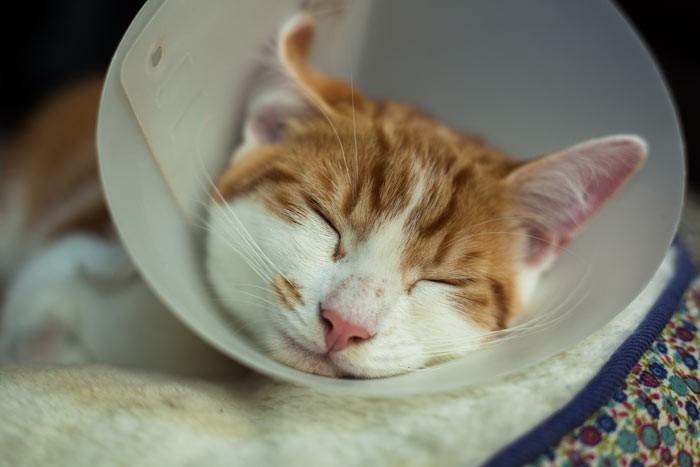 Sử dụng phễu chuyên dụng cho mèo