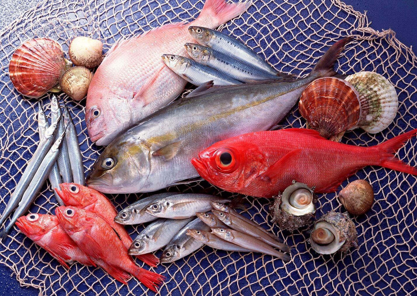 Cá la hán khá thích các loại thức ăn tươi sống