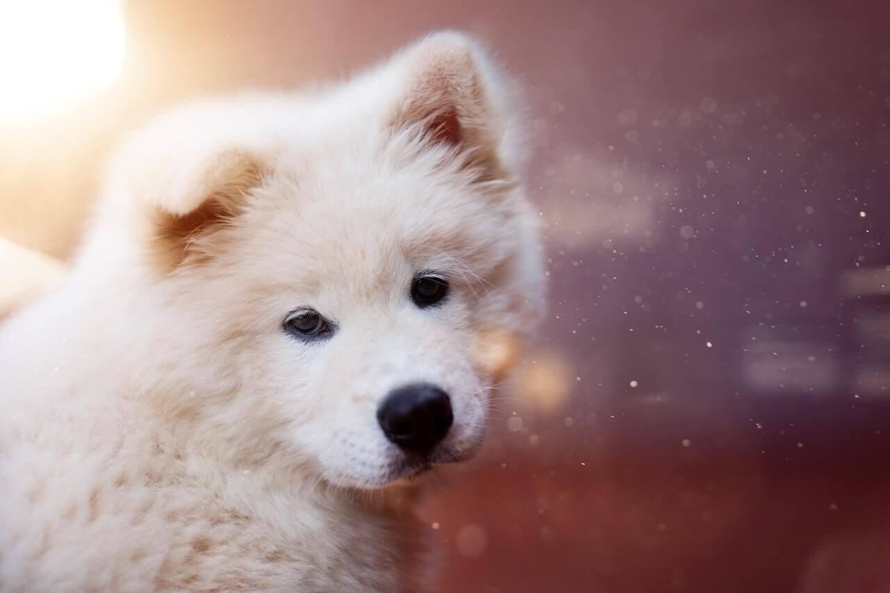 Chó - Người bạn trung thành của con người