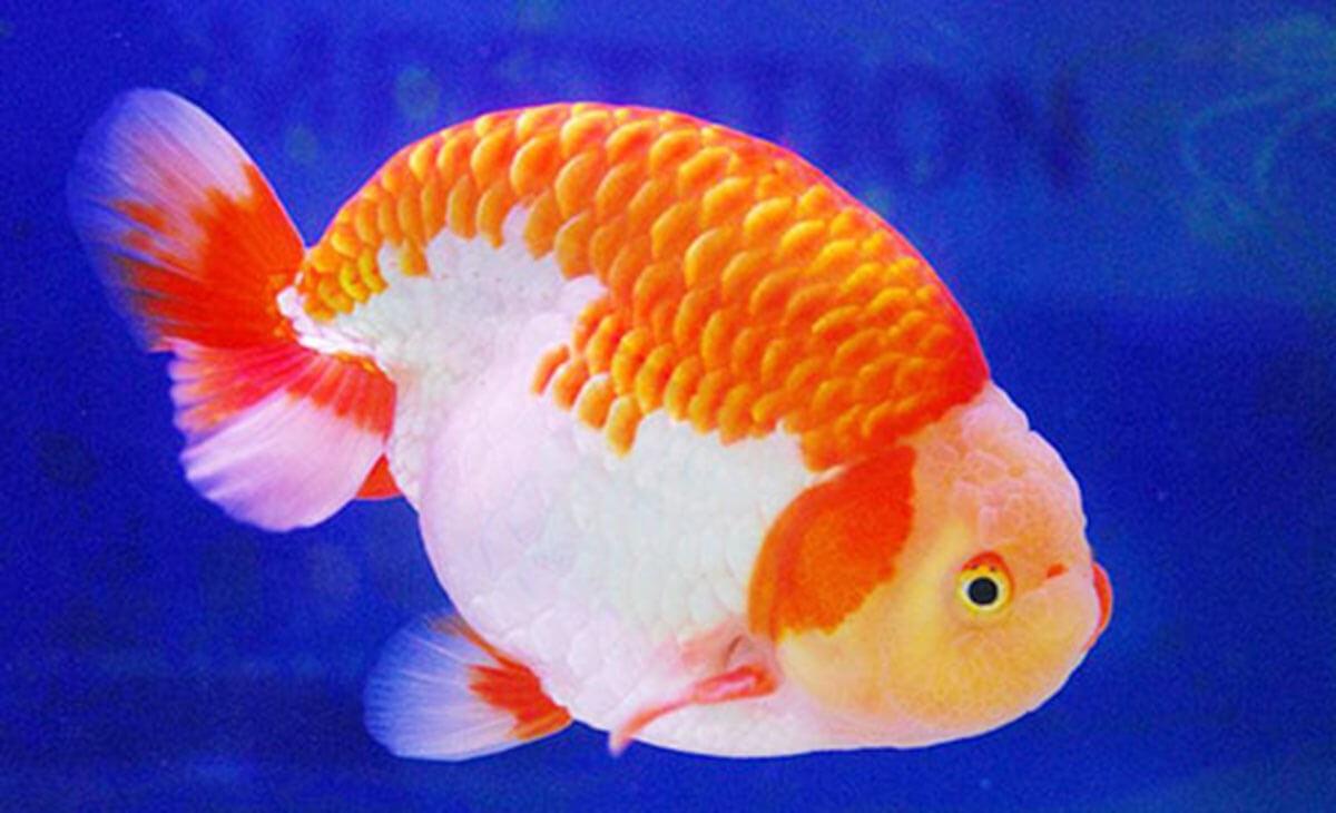 Những lợi ích của các loại cá cảnh dễ nuôi