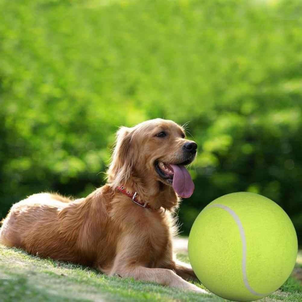 Bóng ném là đồ chơi cho chó được yêu thích
