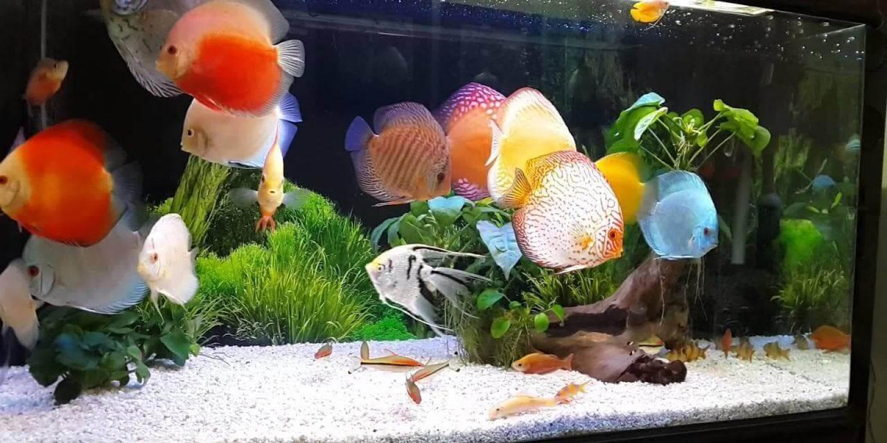 Thức ăn cho cá cảnh nhỏ đẹp