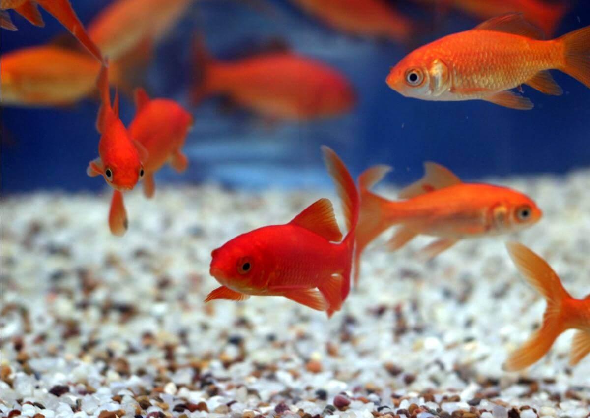 Nhiệt độ của bể nuôi cá cảnh nhỏ đẹp