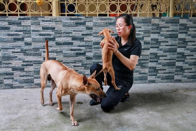 Cách nuôi chó Phú Quốc tại nhà như thế nào?