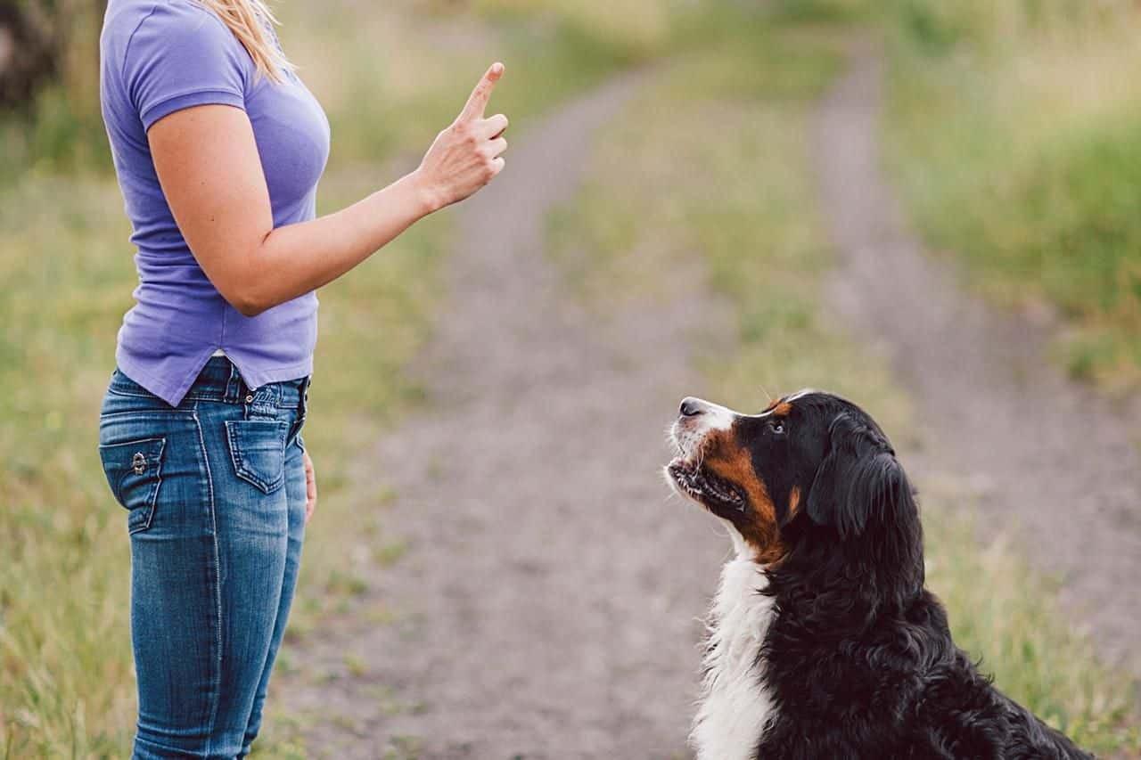 Đừng quên huấn luyện cho cún