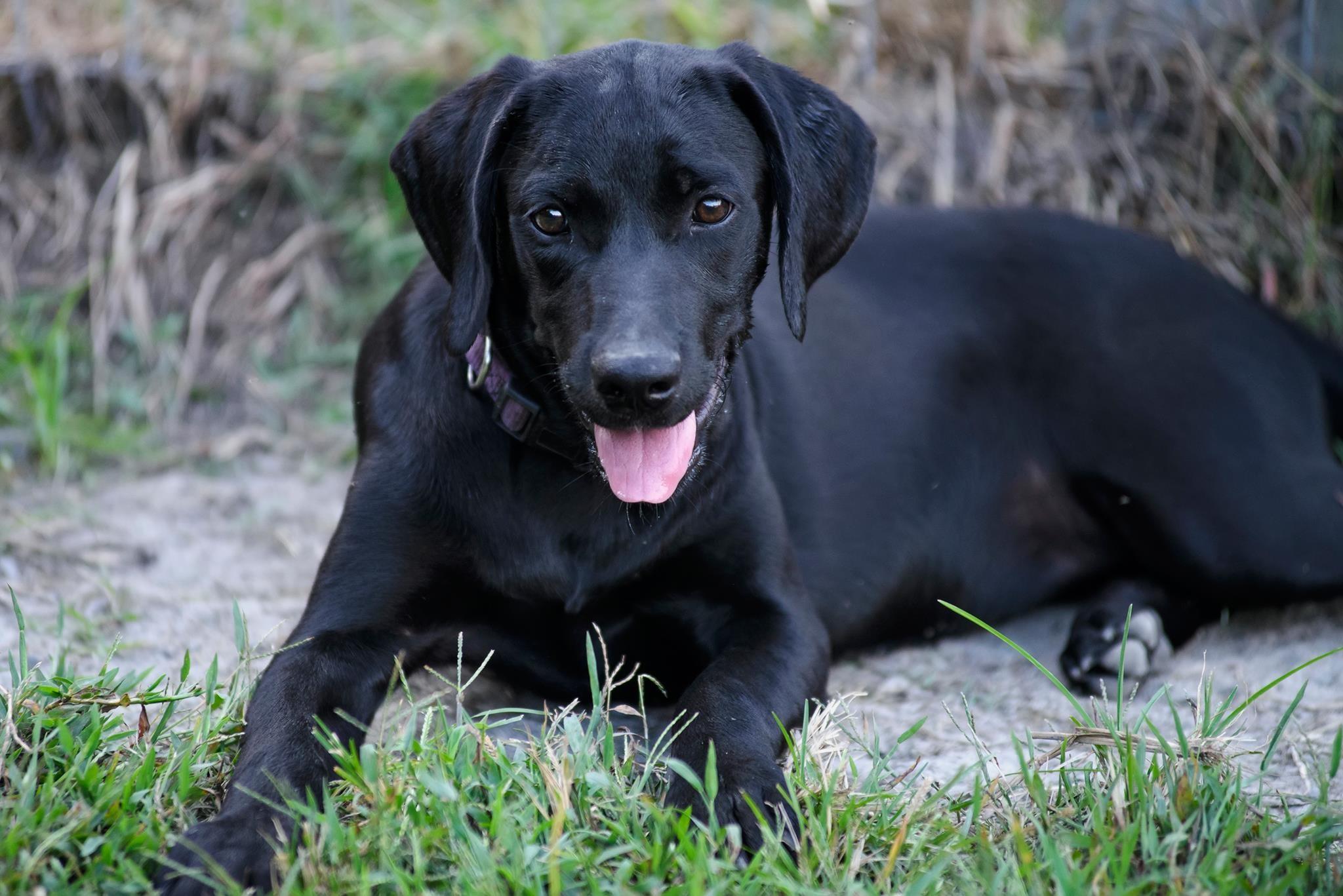 Mơ thấy chó đen có thể là điềm lành, cũng có thể là điềm dữ