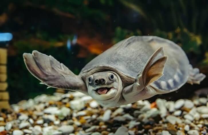 Nuôi rùa phong thủy có thực sự mang lại may mắn?