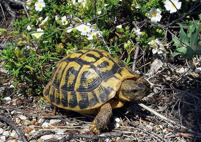 Nhặt được rùa trên đường là điềm xấu