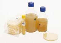 DEV Nutrient Agar 20PC Merck