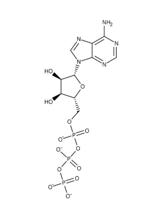 Adenosine 5'-triphosphate, disodium salt hydrate, 98% 10g Acros
