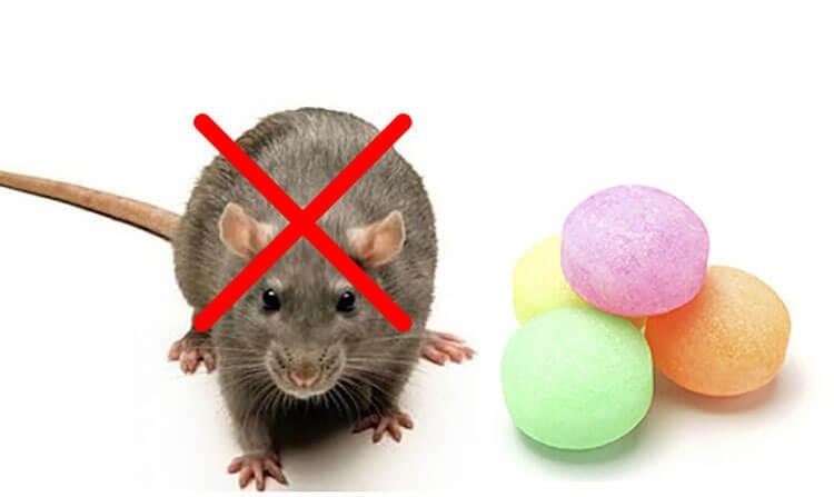 Băng phiến đuổi chuột
