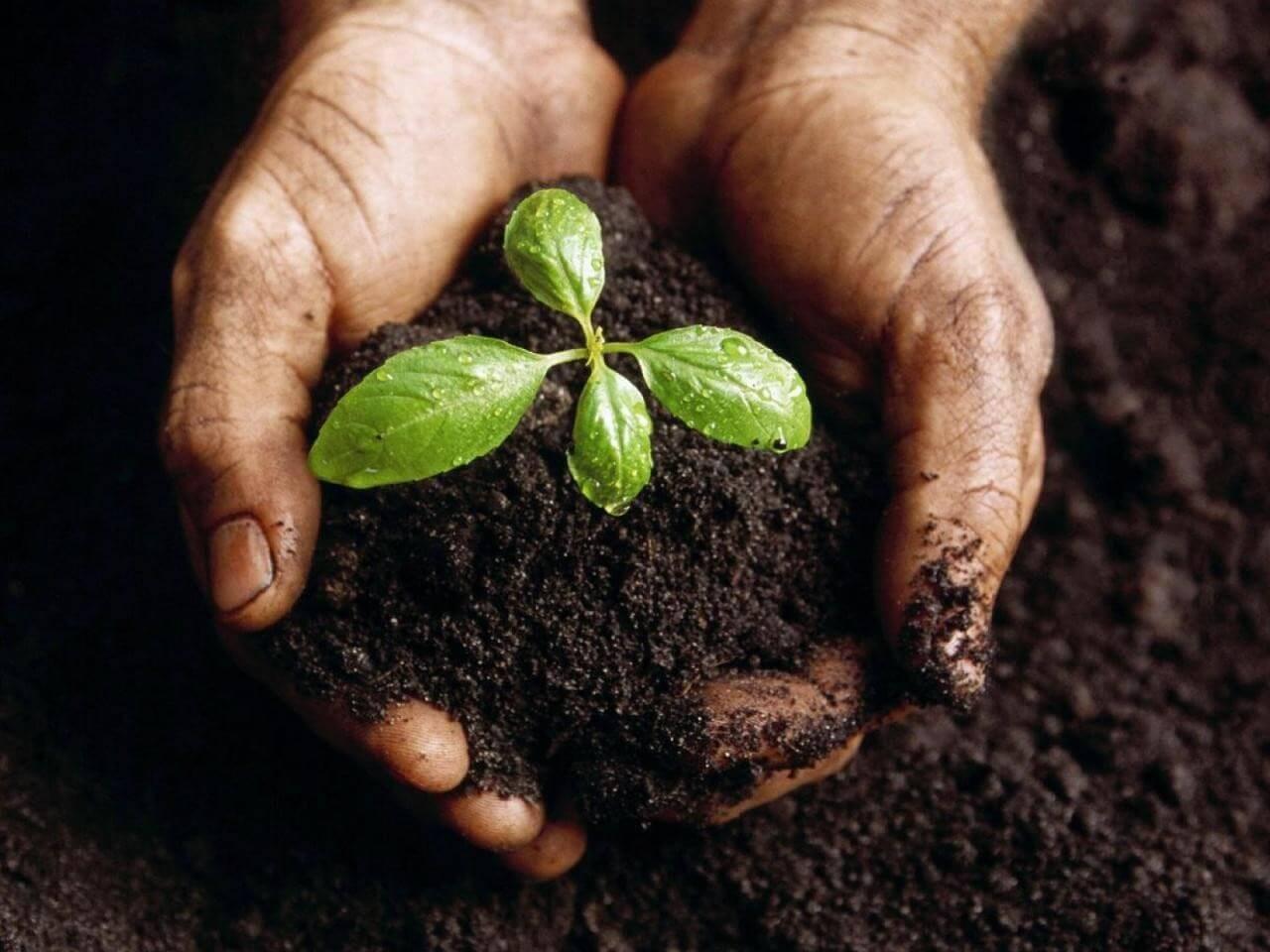 MgCl2 sử dụng làm phân bón bổ sung Mg2+ cho cây trồng