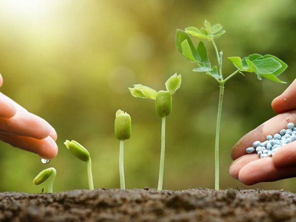 Amoni nitrat dùng làm nguyên liệu sản xuất phân bón giúp tăng năng suất cây trồng
