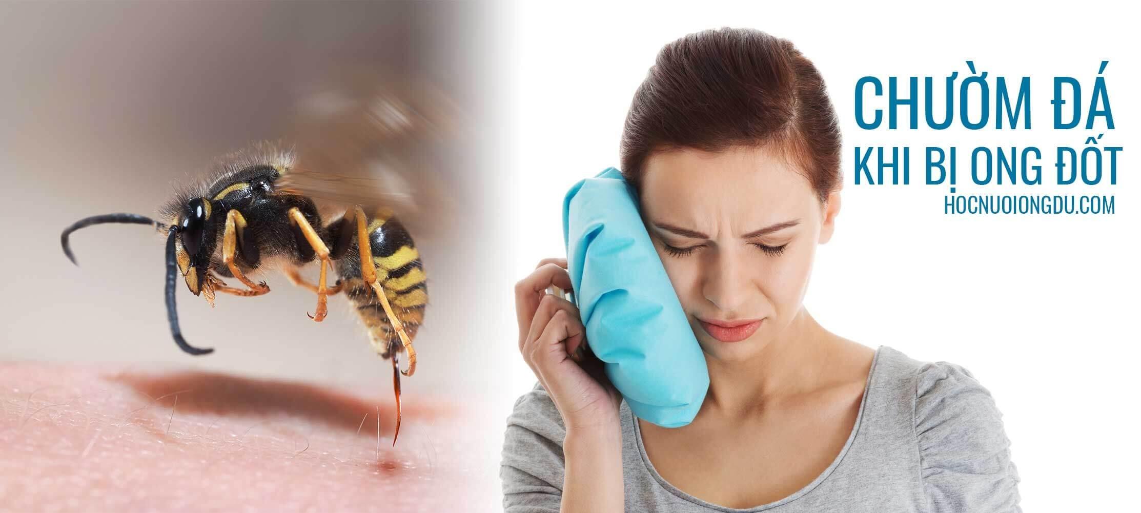 Đá lạnh là phương pháp hợp lý xử lý bị ong đốt