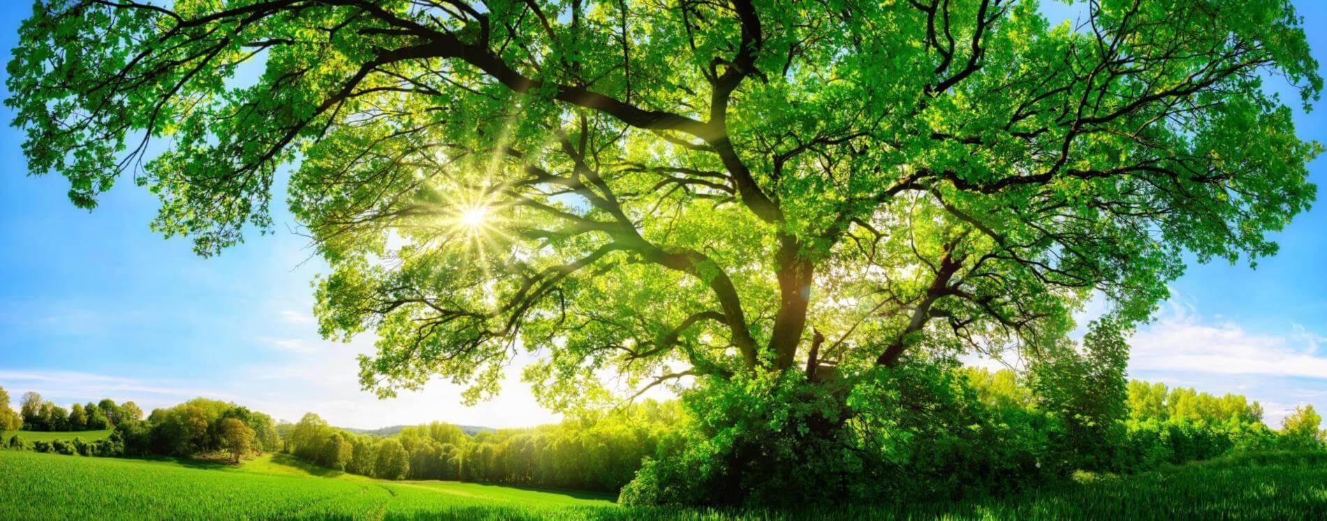 Vai trò của quang hợp đối với sự sống và những thông tin cần biết