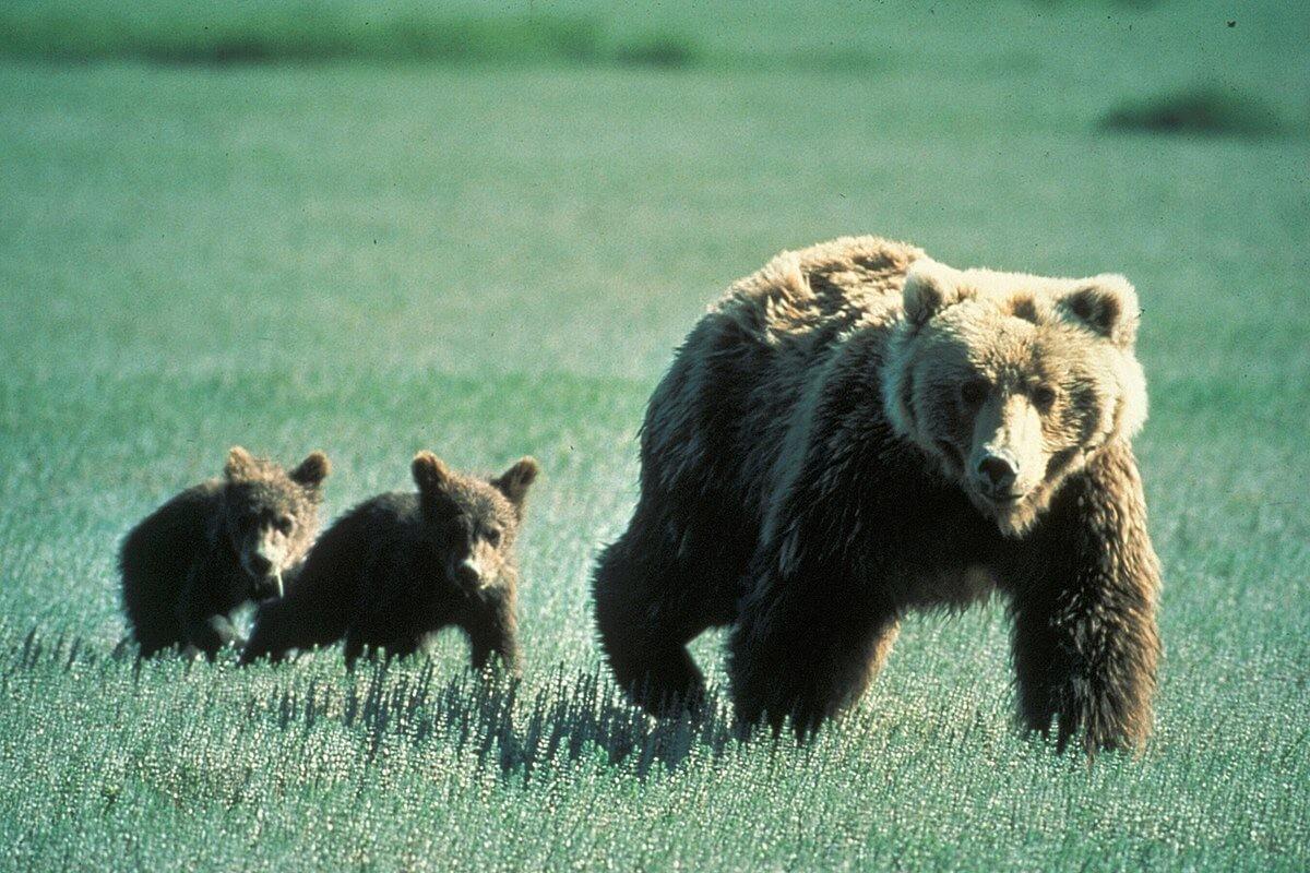 Có nên sử dụng nhiều mật gấu hay không