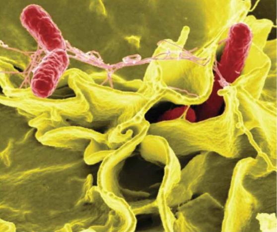 Giật mình với 13 căn bệnh do nguồn nước ô nhiễm và cách phòng tránh