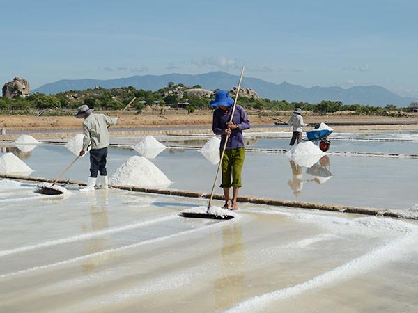 quy trình sản xuất muối sạch trên cát tại Vũng Tàu
