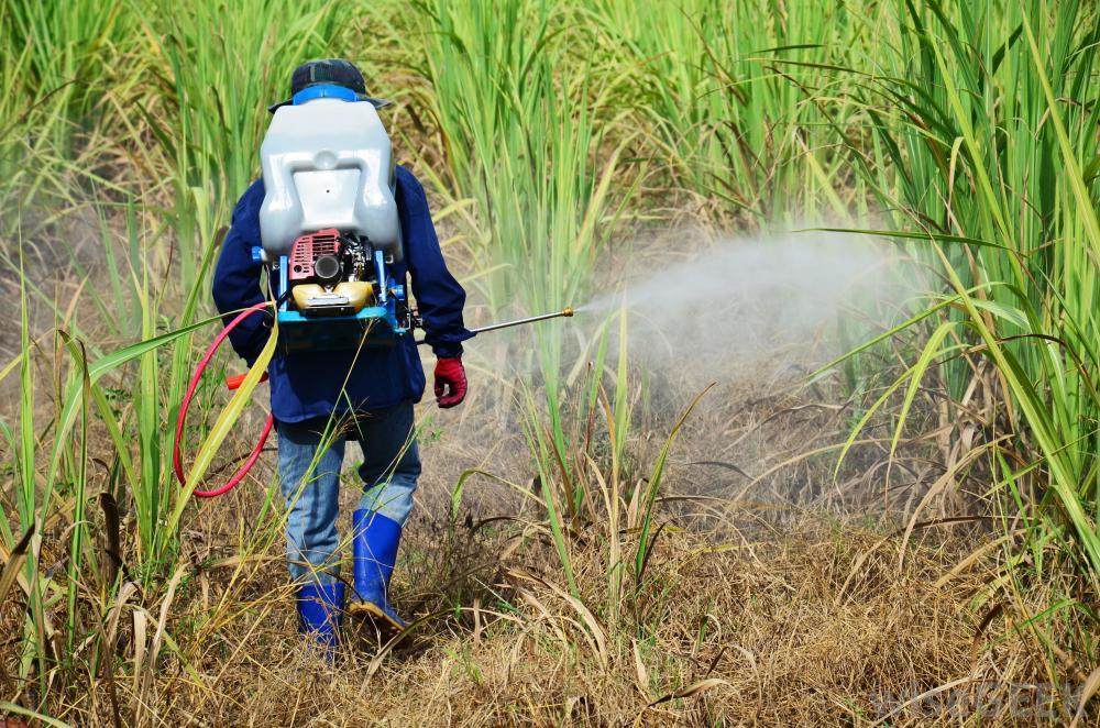 thuốc bảo vệ thực vật gây ảnh hưởng xấu đến cân bằng sinh thái
