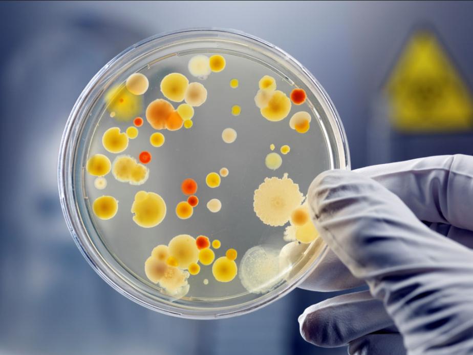 Tủ ấm vi sinh hỗ trợ quá trình nuôi cấy vi sinh vật