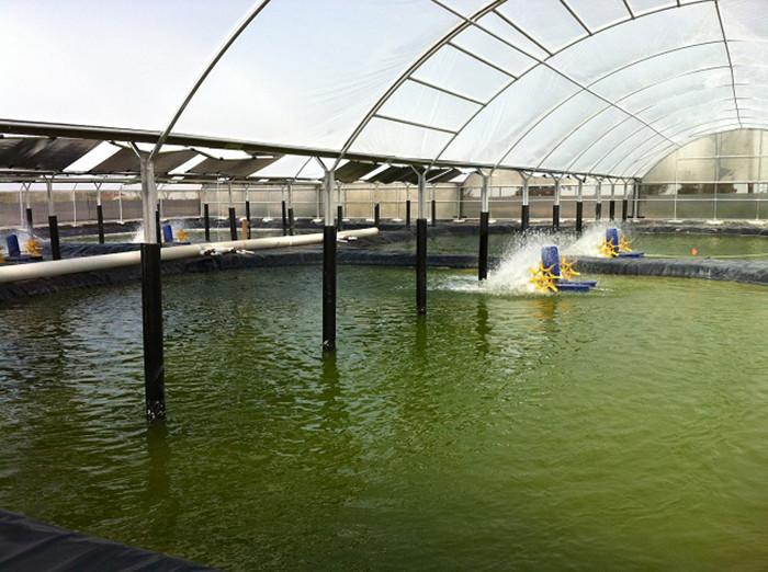 Ứng dụngKMnO4 vào nuôi trồng thủy hải sản