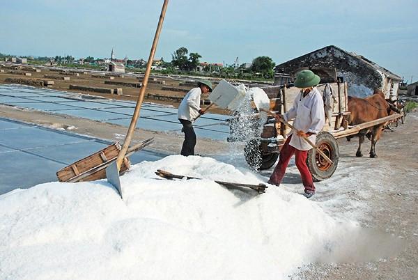Diêm dân đang tất bật thu hoạch muối ở xã Quỳnh nghĩa, tỉnh Nghệ An