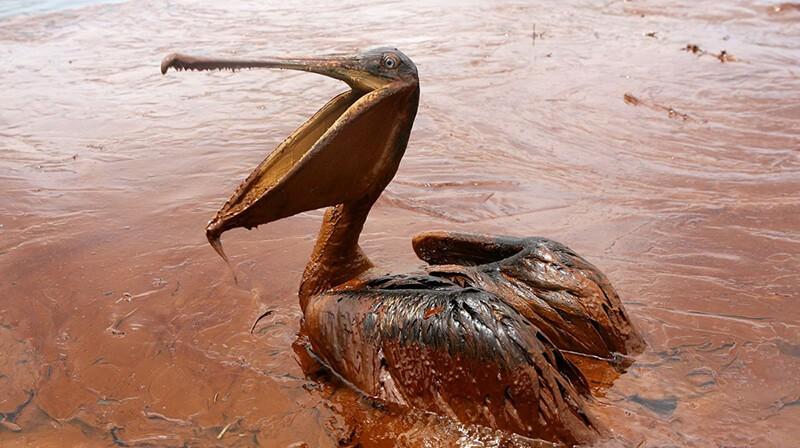 Ô nhiễm nguồn nước ảnh hưởng đến sự phát triển của động vật