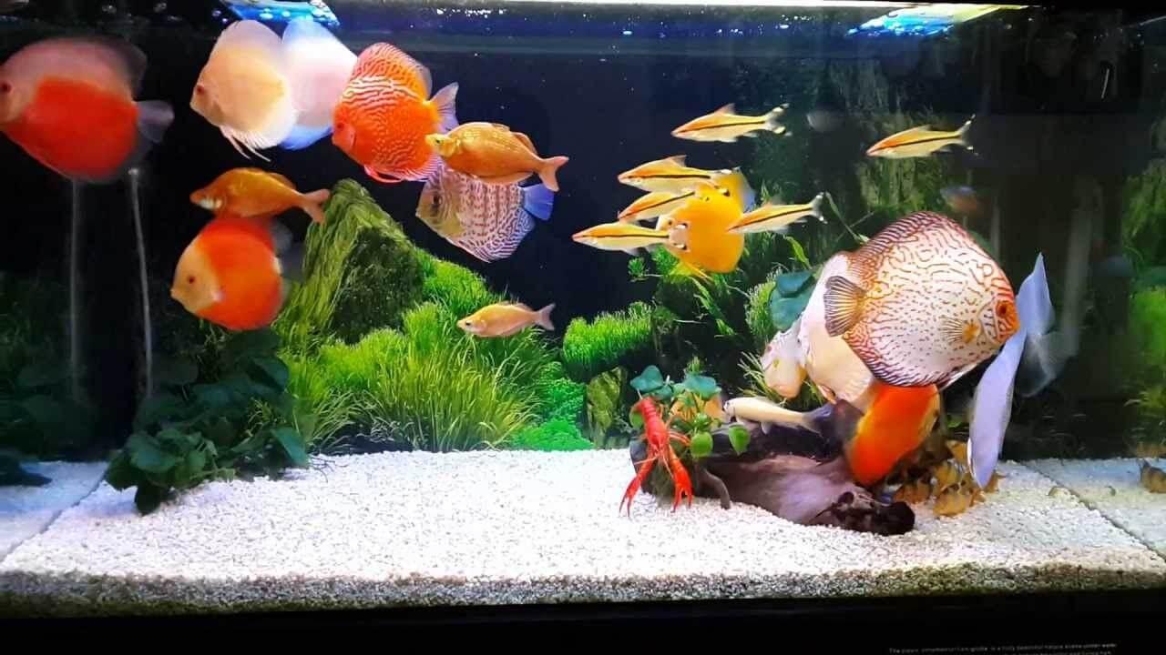 Độ pH trong hồ cá có ảnh hưởng trực tiếp đến sự sinh trưởng và phát triển của các loài thủy sinh