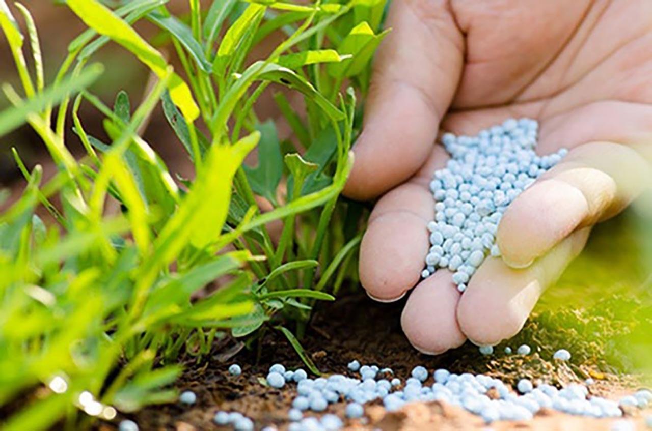 Amoni góp phần quan trọng giúp cây trồng phát triển