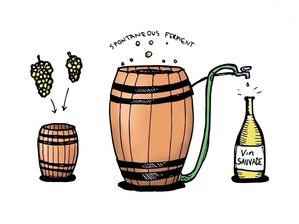 Quá trình lên men rượu