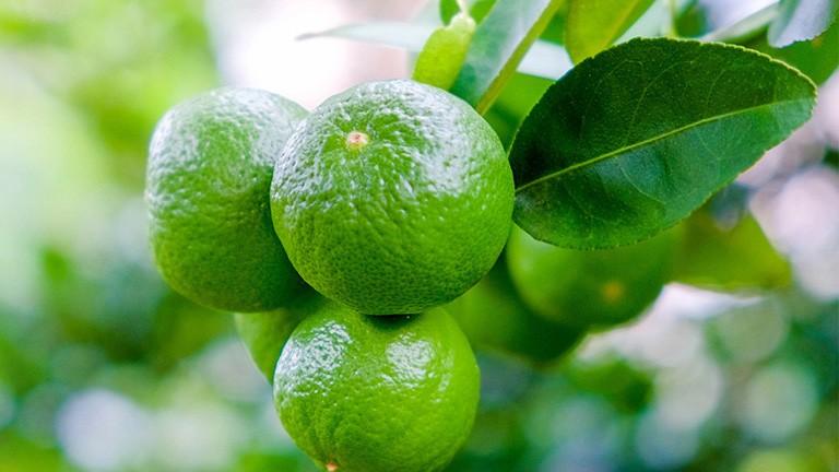 Axit citric có nguồn gốc từ quả chanh