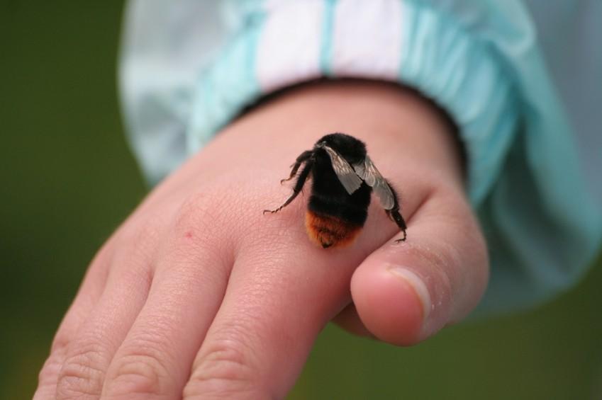 Axit fomic ở trong nọc độc của các loài ong