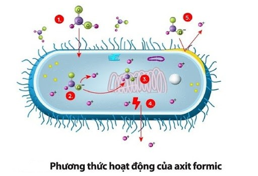 Phương thức hoạt động của axit fomic