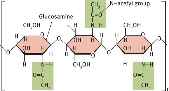 Cấu trúc phân tử của chitin