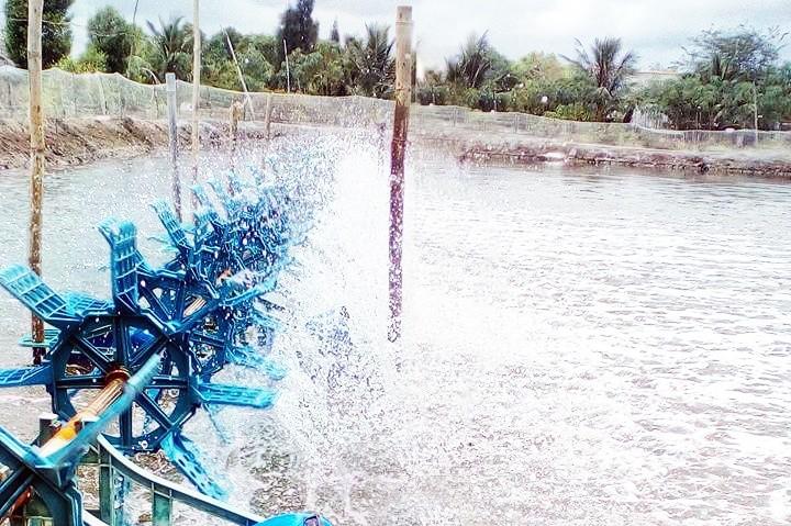 Nước trong các ao hồ nuôi trồng thủy hải sản cần đo nồng độ oxy hòa tan thường xuyên