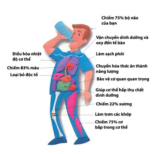 Nước quan trọng đối với cơ thể như nào