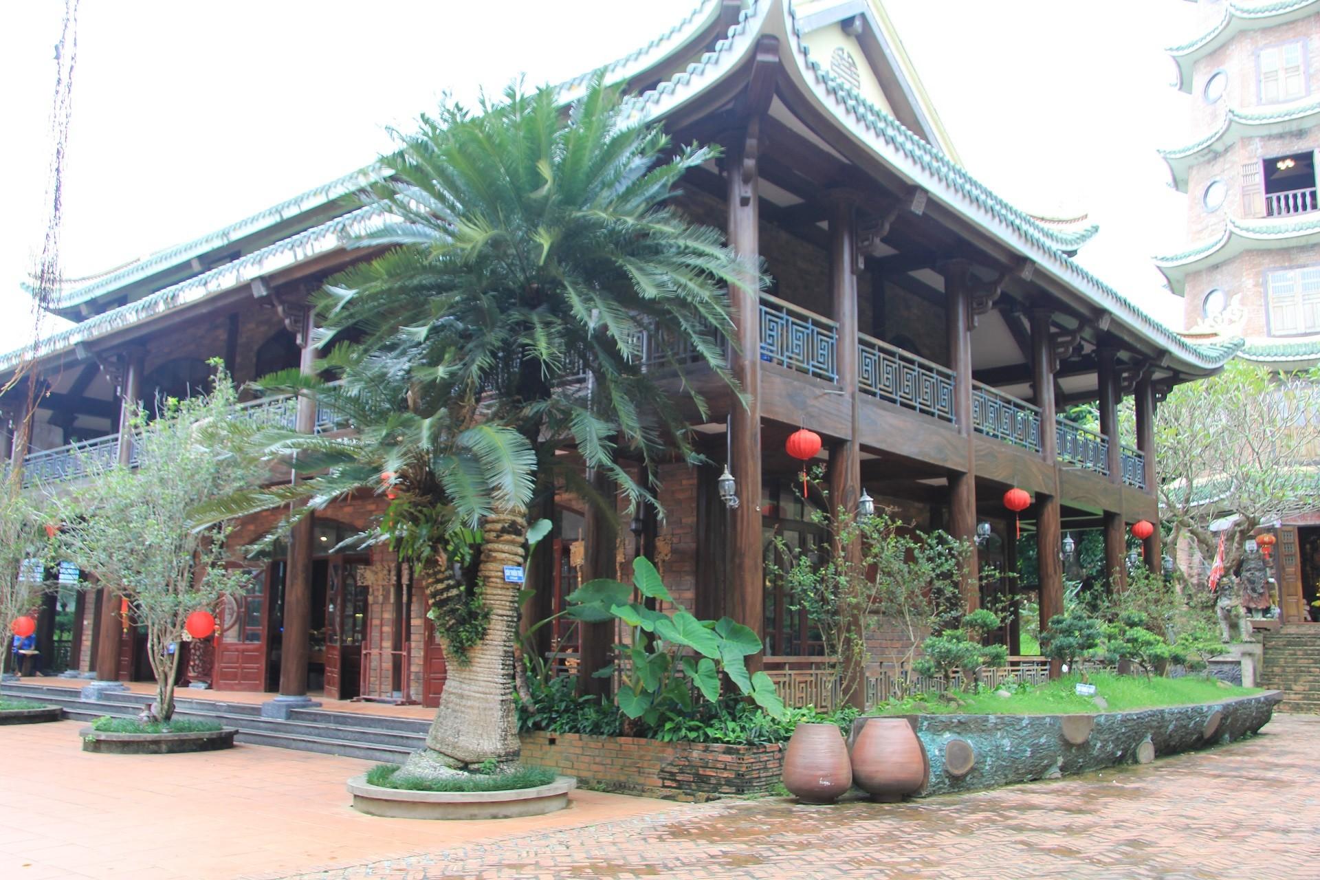 Cây Thiên Tuế 300 tuổi
